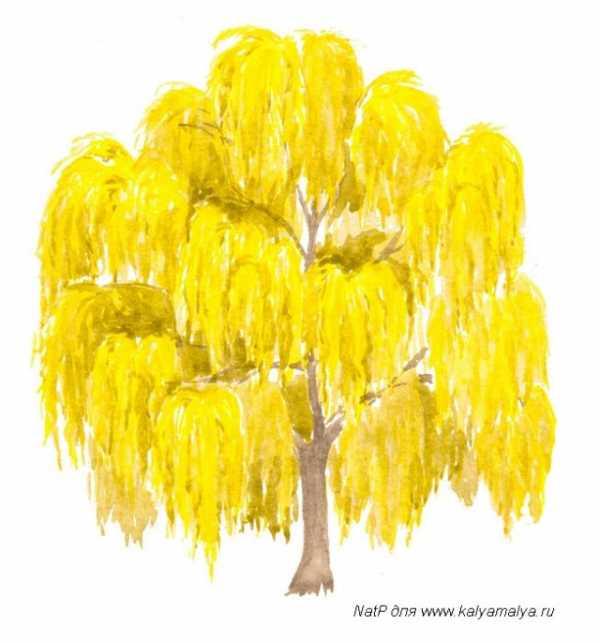 Картинка дерево ива – Ой!