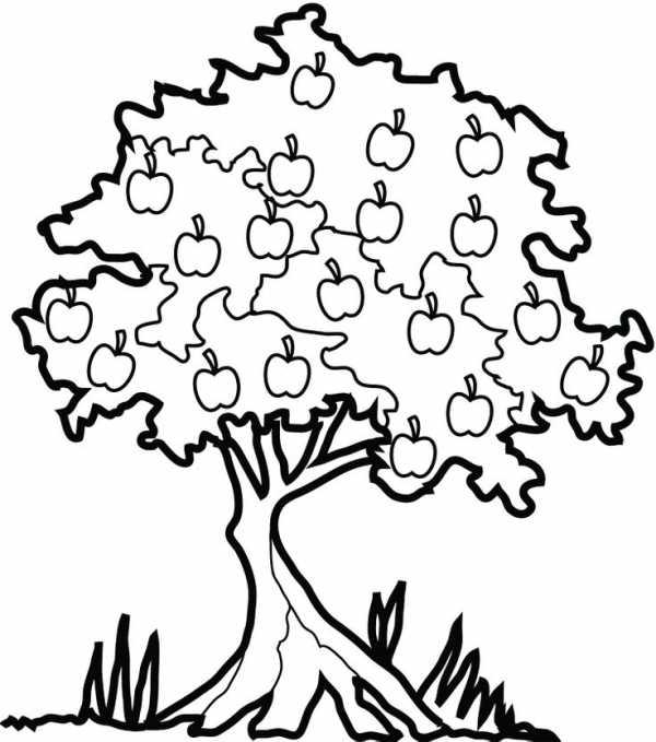 Картинка раскраска для детей дерево – Раскраска Дерево