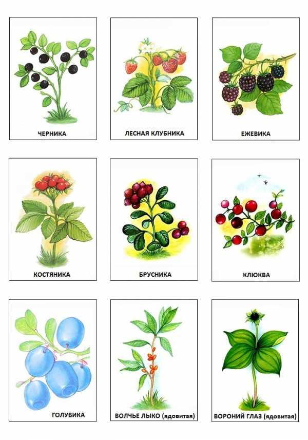 Картинки для раскрашивания грибы и ягоды – Раскраска Ягоды