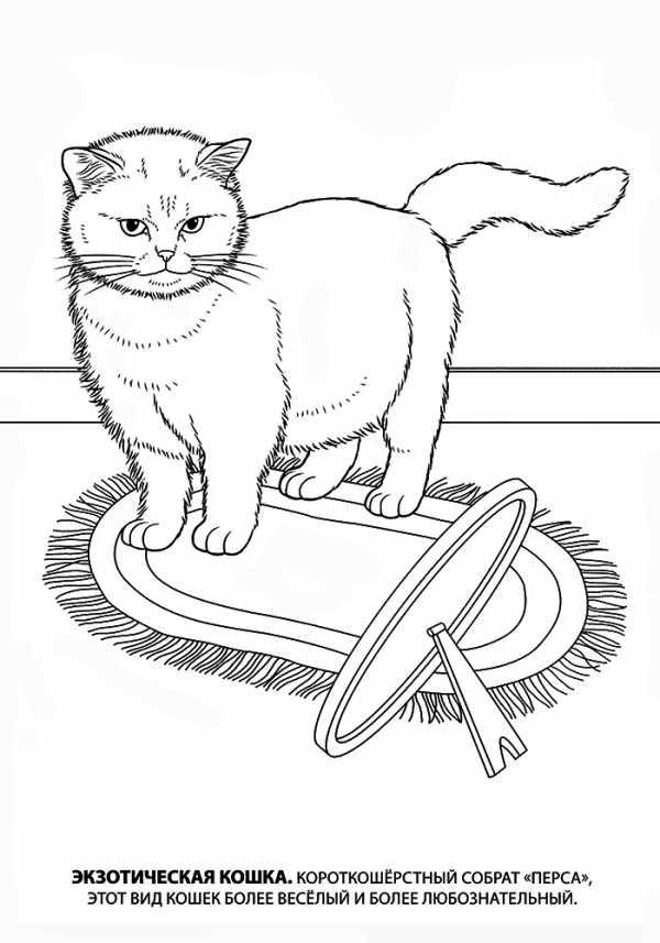 картинки кот для детей детского сада цветные картинки