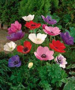 Первые цветы весной – 11 самых первых весенних цветов в саду
