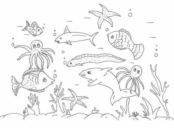 рисунок морж для детей как нарисовать моржа карандашом